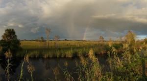 nature near naples florida